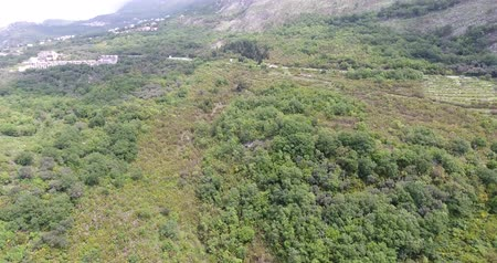softwood forest : Flight over the mountains covered in rain forest