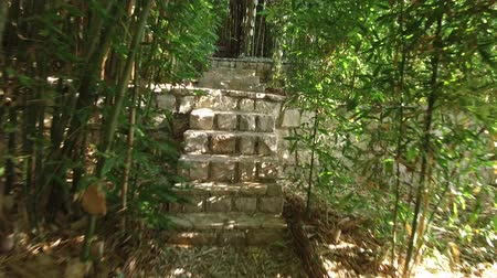 Walk through the bamboo grove in the public park. The camera moves along a narrow path among dense thickets of bamboo, we can see stone steps on the path