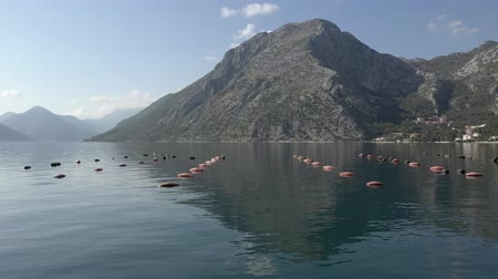 osztriga : Aerial shoot of an oyster and mussel farming with buoys in a Boka-Kotor bay, Montenegro, the Adriatic coast in the summer. Mountains in the background