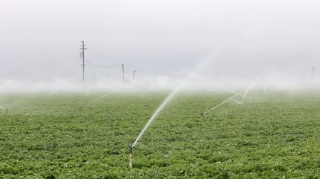 üretmek : Rotating Sprinklers Irrigate Produce Fields in Salinas Valley, California. Stok Video