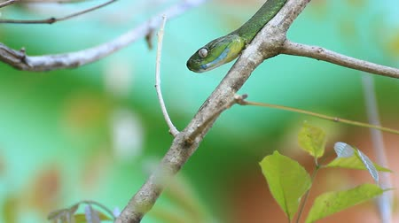 anima : Green Snake Stock Footage