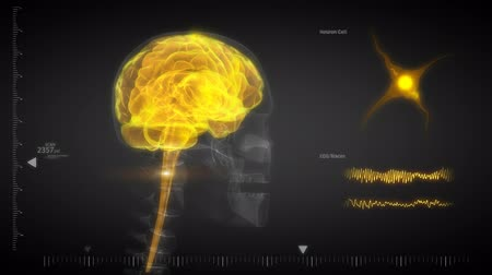 zihinsel : Human brain x-ray scan with flashing neurons
