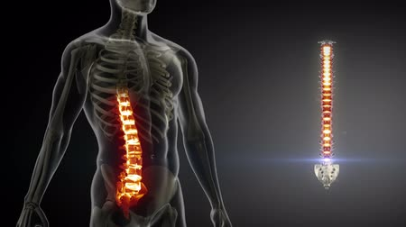 médicos : Spine anatomy medical scan  Vídeos