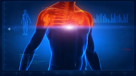 bas : Human body scan - part 4 - chest and spine