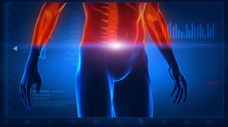 omuzlar : Human body scan - part 3 - back and abdomen