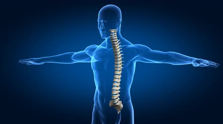 humans : Human spine concept from different angle  Stock Footage