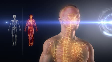 dönen : Human body medical x-ray scan
