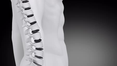 aktywność : Spine intervertebral discs scan in walking man
