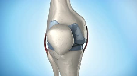 kolano : Knee medical anatomy in loop