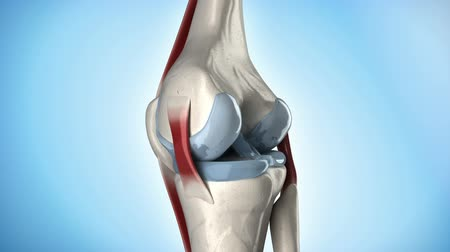 orvostudomány : Knee joint anatomy in loop