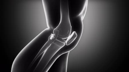 kolano : Knee anatomy in loop x-ray  Wideo