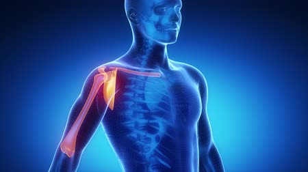 omuzlar : SHOULDER joint skeleton x-ray scan in blue