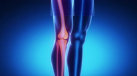 crânio : KNEE skeleton x-ray scan in blue