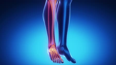 boné : ANKLE joint skeleton x-ray scan in blue Stock Footage