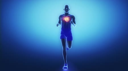 circulatory : Running man heart scan in slow motion