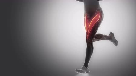 diz : rectus femoris - leg muscles anatomy anaimation Stok Video