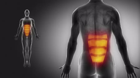 abs : rectus abdominis - muscle view with muscle map Stock Footage