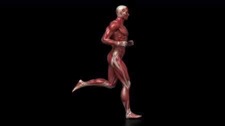 sprintel : Running muscular man with visible muscles in loop Stock mozgókép