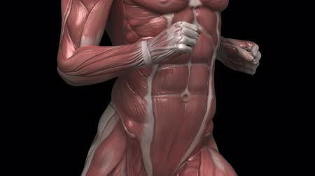 sprintel : Running muscular man with visible muscles front view