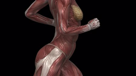 sprintel : Running muscular woman with visible muscles in loop left view