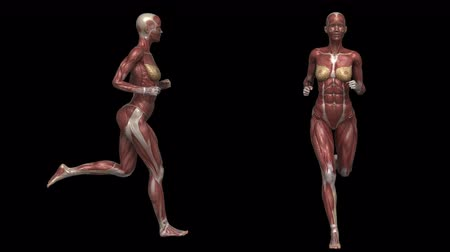 sprintel : Running muscular woman with visible muscles in loop with alpha channel