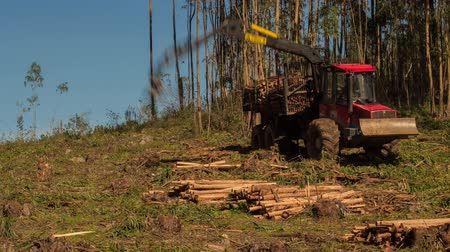 forest destruction : Timelapse shot of a logging machine picking up tree trunks Stock Footage
