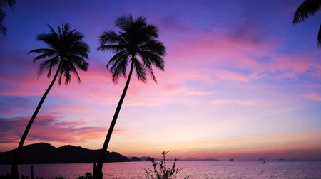 lanscape : Sunrise with beautiful violet pink sky and coconut trees, sea breeze with tropical scene.