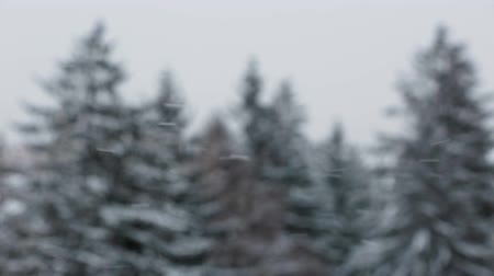 Snowflakes falling with out of focus pine forest in background