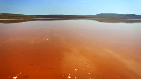 salt marsh : Aerial view of salt lake water evaporation ponds with pink and orange plankton colour Stock Footage