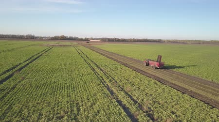 yem : Harvesting sugar beets. Combines and cars remove root crops from the field. Aerial survey from a drone or quadrocopter. Autumn field work on the farm. Harvesting raw materials for sugar production
