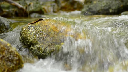esplêndido : Closeup of fresh water flowing across the mossy stone in tropical rainforest
