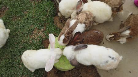 tame animal : Adorable fluffy bunny rabbits in backyard
