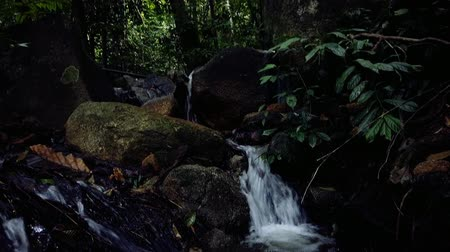 tropikal iklim : Beautiful tropical green forest nature in lush Stok Video