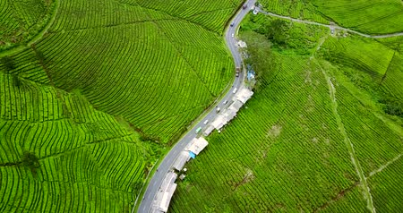tea plantation : Video footage of aerial view of curved highway on the fresh tea plantation at Subang highland, West Java - Indonesia Stock Footage