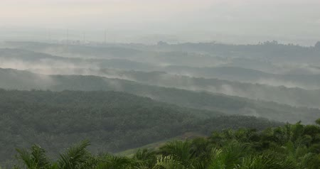 palm oil plantation : Beautiful aerial landscape of fog on misty morning at palm oil plantation in Cikidang, Sukabumi, West Java, Indonesia. Shot in 4k resolution