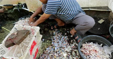 žába : JAKARTA - Indonesia. March 28, 2018: Man washing the killed frogs for cooking in local market at Chinatown of Glodok, Jakarta, Indonesia. Shot in 4k resolution