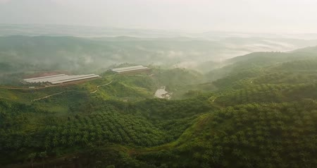 palm oil plantation : Beautiful aerial scenery of lush palm oil plantation on misty morning from a drone at Sukabumi, West Java, Indonesia. Shot in 4k resolution Stock Footage