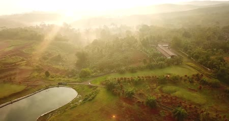 palm oil plantation : Beautiful aerial scenery of sunrise time above palm oil plantation at Sukabumi, West Java, Indonesia. Shot in 4k resolution Stock Footage