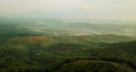 palm oil plantation : Beautiful aerial view of lush palm oil plantation from a drone on misty morning at Sukabumi, West Java, Indonesia. Shot in 4k resolution