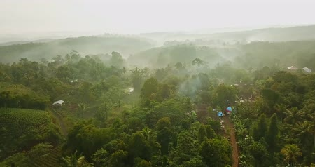 palm oil plantation : Drone view of beautiful landscape on misty morning at palm oil plantation in Sukabumi, West Java, Indonesia. Shot in 4k resolution