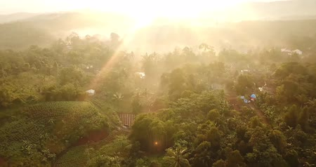 palm oil plantation : Beautiful aerial view of sunrise at palm oil plantation in Sukabumi, West Java, Indonesia. Shot in 4k resolution Stock Footage