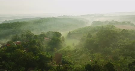 palm oil plantation : Stunning aerial footage of misty morning at lush palm oil plantation in Sukabumi, West Java, Indonesia. Shot in 4k resolution