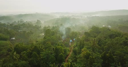 palm oil plantation : Beautiful landscape of misty morning at palm oil plantation from a drone flying at Sukabumi, West Java, Indonesia. Shot in 4k resolution Stock Footage