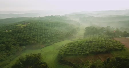 plantio : Stunning aerial landscape above green rice field and palm oil plantation on misty morning at Sukabumi, West Java, Indonesia. Shot in 4k resolution