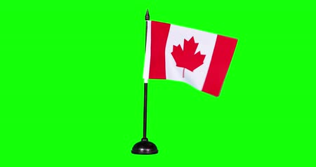canadian maple leaf : Slow motion of Canada flag waving on green screen background in the studio