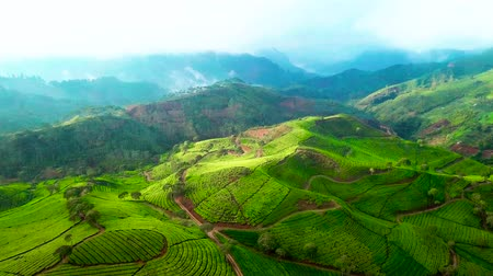 java : Beautiful aerial landscape of green tea plantation on the morning in Pangalengan, Bandung, West Java, Indonesia. Shot in 4k resolution