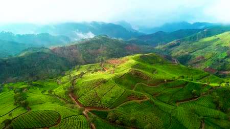 склон : Beautiful aerial view of tea plantation on the morning in Pangalengan, Bandung, West Java, Indonesia. Shot in 4k resolution