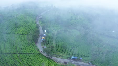 java : Beautiful aerial landscape of green tea plantation with empty street on misty morning in Bandung, West Java, Indonesia. Shot in 4k resolution from a drone flying from left to right