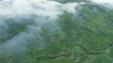 java : Beautiful aerial view of tea plantation farmland on foggy morning in Bandung, West Java, Indonesia. Shot in 4k resolution from a drone flying forwards