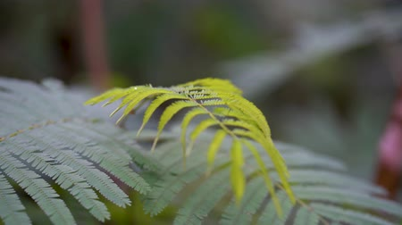 ferns : Closeup of green fern leaves on the jungle at the morning. Shot in 4k resolution Stock Footage